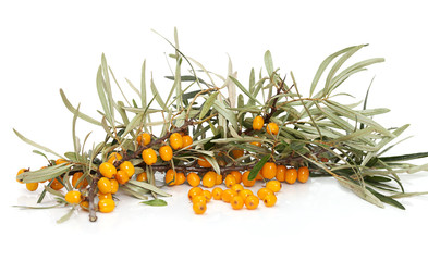 Orange seabuckthorn