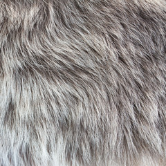 abstract fur background