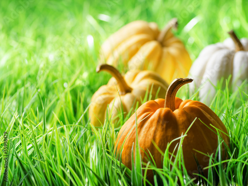 Pumpkins on green natural grass