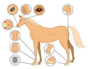 馬、健康、チェックポイント