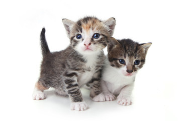 Sweet Adorable Baby Kittens Exploring Their Space