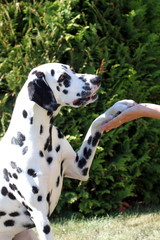 Hund gibt Pfote und schaut liebevoll zu Herrchen