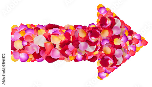 arrow of fresh  flower petals