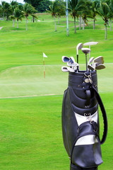 Golf bag with plam tree on golf course