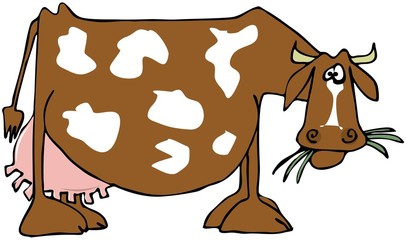 Cow with a large udder