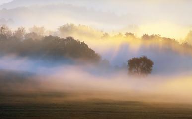 Drzewo w mgły sunbeam