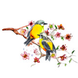Fototapety watercolor drawing of cute bird
