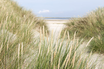 Sandy dunes in the Netherlands