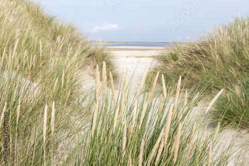 Fototapeten,insel,holland,niederlande,sanddünen