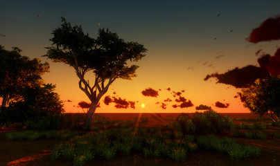 landscape  tree in sunset