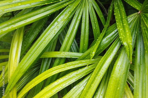 bamboo palm leaves © shutterofdreams