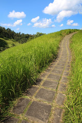 Bali - Crète de Campuhan (Udud)