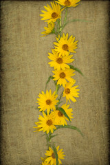 Sunflowers on a gold textured background