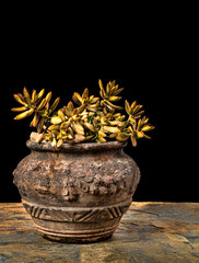 Sedum in an old cracked clay pot on slate