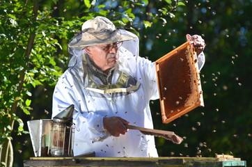 Doświadczony pszczelarz podczas inspekcji jesiennej w pasiece