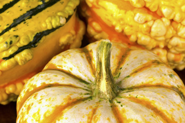 Fall Squash or Gourds in Closeup