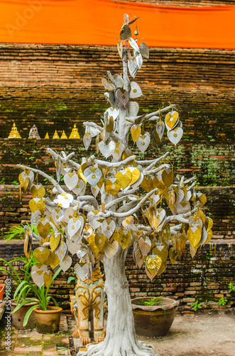 Gold and silver bodhi in Thai Buddhism temple