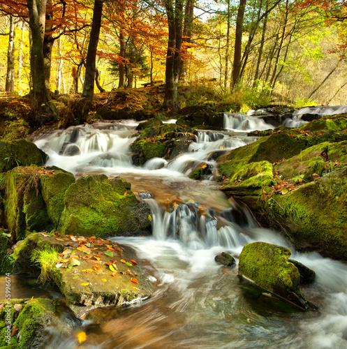 Plakat Herbstwald mit Bunten Blättern