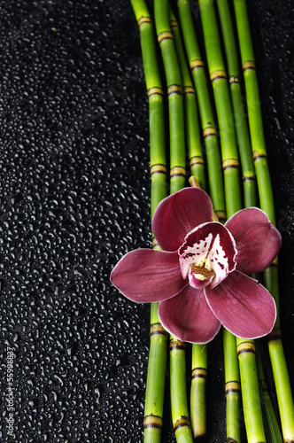 orchid and thin bamboo grove on wet background