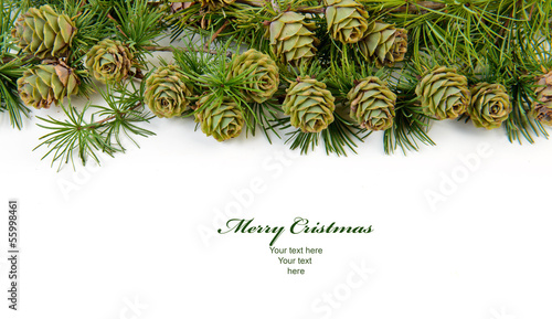 Christmas evergreen tree background