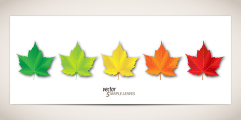 5 Maple Leaves