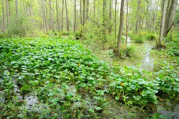 Forest swamp landscape view