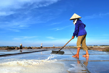 The woman harvesting salt in salt fields