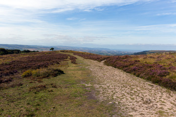 Quantock Hills Somerset England with purple heather