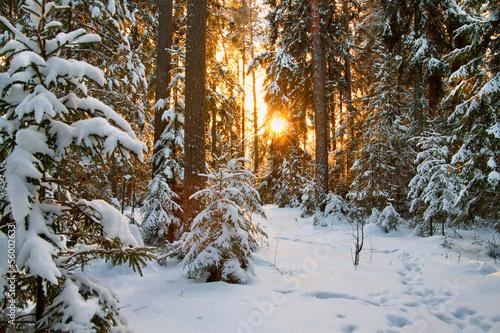 Fotobehang Bossen winter landscape