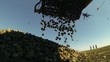 Crane Conveyor Unloading Sugar Beet