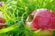 red  apples lie on a green grass