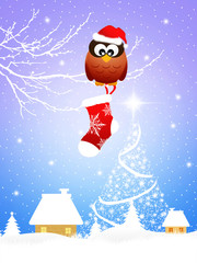Owl with Christmas sock