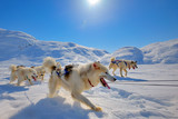 Sled dogs  running in Greenland