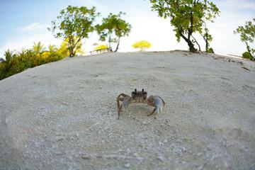 crab on a white sand beach
