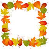 Autumn vector leaf border