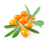 sea buckthorn berries isolated on the white