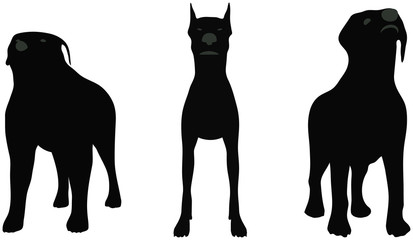 stock vector of dogs silhouette standing