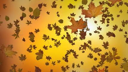 Sun shining through fall leaves . Outdoor.