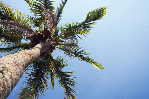 Foto op Plexiglas Indonesië background of palm tree, Bali, Indonesia