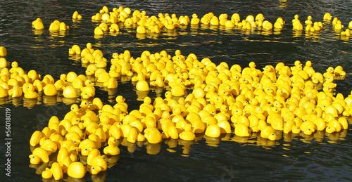 Leinwanddruck Bild Floating yellow little ducks