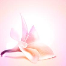 Salutation ou modèle de carte d'invitation avec fleur de magnolia.