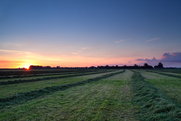 rows of hay at sunrise