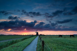 Dutch windmill and horses on pasture