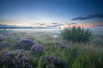 misty sunrise over heathland