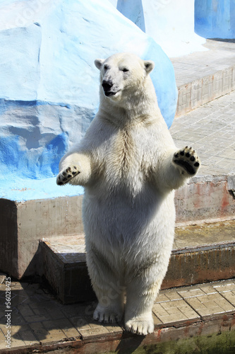 In de dag Ijsbeer Polar bear standing on its hind legs.