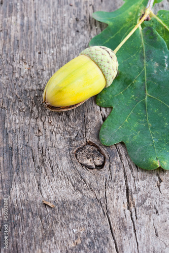Acorn with an oak leaf on a old textured wooden background