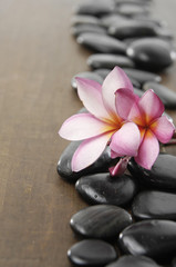 Row of spa stones with frangipani flower