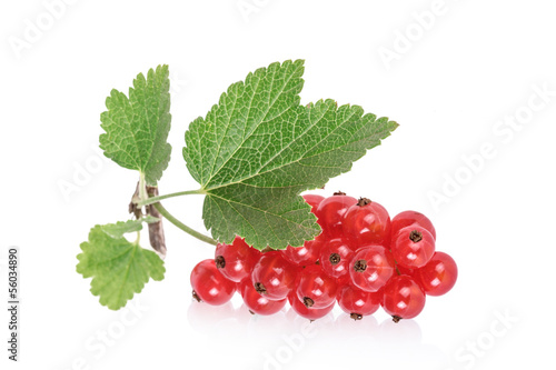 Rote Johannisbeeren, red currants, isolated