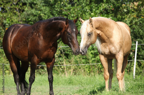 Two stallions standing on pasturage