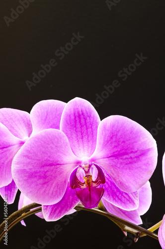 Fototapeten,orchidee,orchidee,blume,topfpflanze